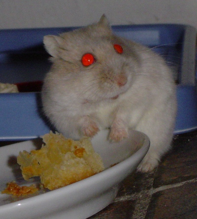 Verjaardag Simba En Gekko Hamsterforum
